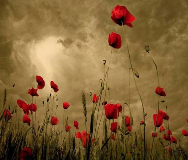 Poppies in the Clouds