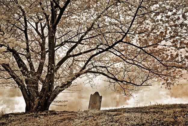 0903272026001tree_grave