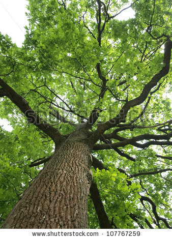 Beneath the shade of that old oak tree!
